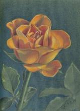 orange rose040714small