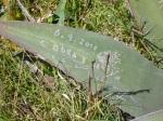 Aloe vera is a hardy plant, no doubt.