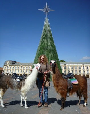 Me with the llamas and the Christmas cone on the square of La Candelaria, Bogotá.