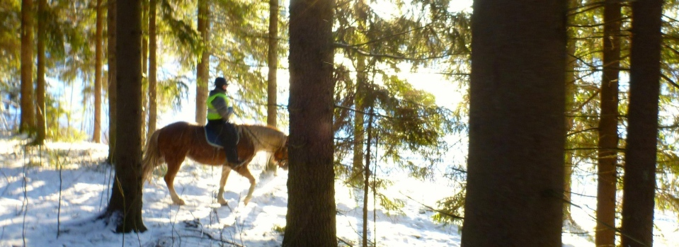 Finnhorse0113ban