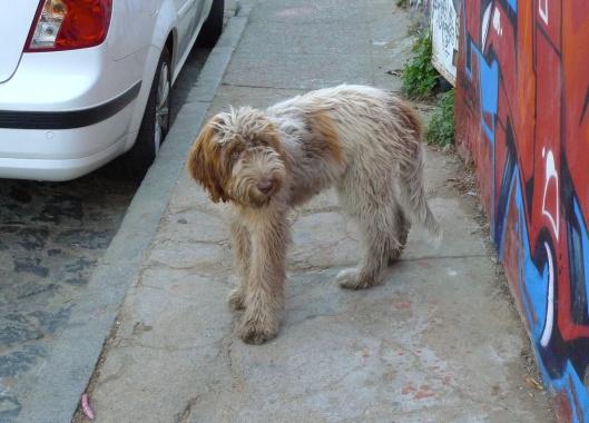doggie2small