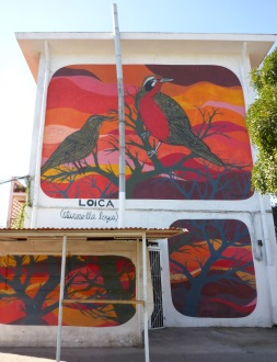 Charquipunk: Loica, No 36
