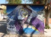 Mountain wildlife: condor