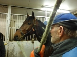The stable master and a young horse in Vermo