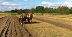 Ploughing with horses (photo: ©Mari Luukkonen)