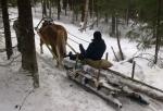 Doing forest work with a horse (photo ©Mari Luukkonen)