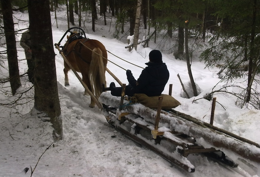 Doing forest work with a horse (photo ©Mari Luukkonen)