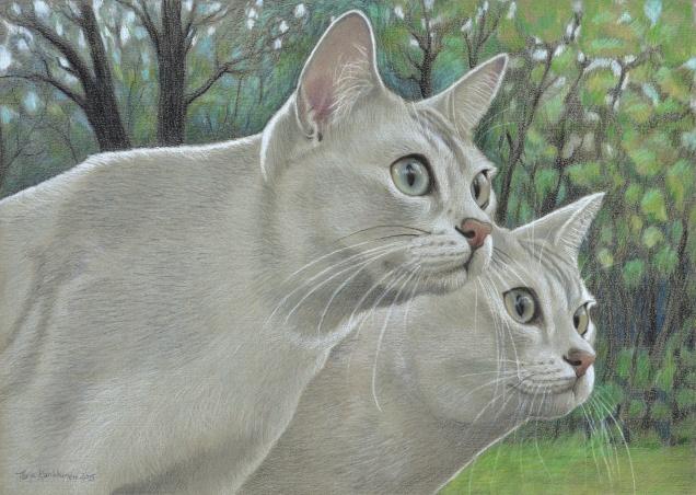 Amo&Lusi3