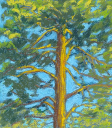 Island pine2007small