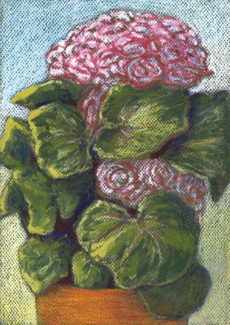 Mambas pot plantA0614small