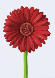 red gerbera0714small