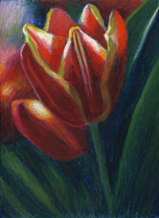 red&yellow tulips
